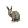 Grey rabbit sitting alone