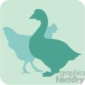animals duck chicken 097