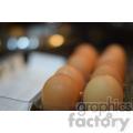 eggs  jpg