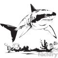 black and white shark