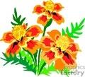 Orange and yellow rastenia