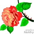 flower flowers plant plants rose roses   rastenia-017 clip art nature flowers  gif, jpg