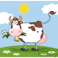 Dairy Cow With Flower In Mouth On A Meadow