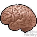 brain illustration vector clip art image