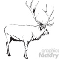 black and white Elk side profile