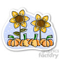 thanksgiving sunflower and pumpkins  gif, png, jpg, eps, svg, pdf