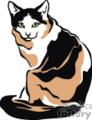 Sitting calico cat