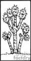 black Joshua tree