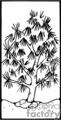cactus004_PRb