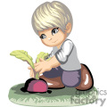 A little boy pulling up a turnip