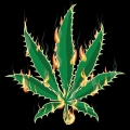 Marijuana weed leaf burning 420