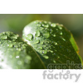 wet leaf  jpg