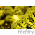 broccoli  jpg