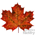 Maple leaf geometry geometric polygon vector graphics RF clip art images