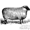 vintage sheep facing right vector vintage 1900 vector art GF