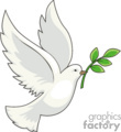 White dove flying with olive branch in its mouth