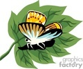 animals animal butterfly butterflies insects   zoo-022-9-2004 clip art animals  gif, jpg